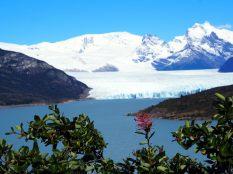 Glacier Perito Moreno (à l'avant plan, des fleurs rouges de Notro (Embothrium coccineum)