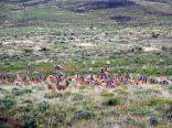Des Guanacos au Parc National Torres Del Paine