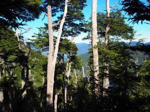 Randonnée au Cerro San Sebastian