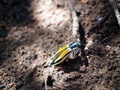 Un insecte croisé au Cerro San Sebastian