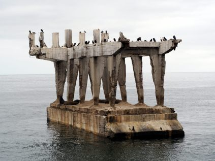 Un ancien bout de port, colonisés par les oiseaux et les lions de mer
