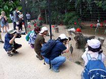 Un magnifique troupeau de Chinoisus photographus, une espèce invasive