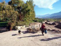 A Maimara