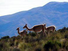 Sur la route pour El Hornocal, la montagne aux 14 couleurs