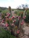 Sur la route entre El Hornocal et Humahuaca
