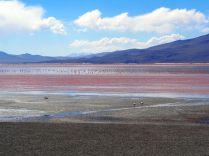 Laguna colorada, Sud Lipez