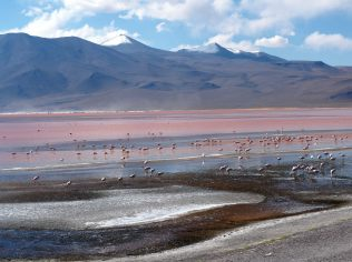 Vol de flamants roses sur la Laguna colorada, Sud Lipez