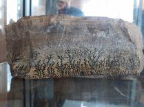 Exemple de fossile trouvé dans le parc de Toro Toro