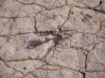 Une trace fossilisée de dinosaure au parc de Toro Toro