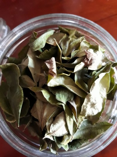 Des feuilles de coca à mâcher