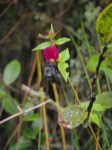Faune et flore au Machu Picchu
