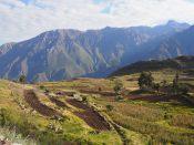 Vue sur le canyon de colca et ses cultures