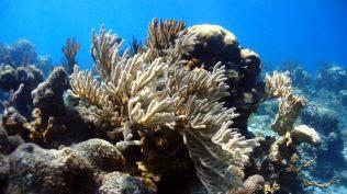Séance de plongée à Playa Larga