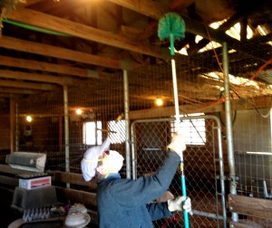Jenny did a great job of cleaning up the barn. She also toke care of the chickens and did all the egg processing.