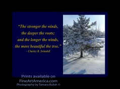 """""""The stronger the winds, the deeper the roots; and the longer the winds, the more beautiful the tree."""" – Charles R. Swindoll. One of the quotes which is included in the book """"On Becoming a Lemonade Maker"""" by Tamara Kulish."""