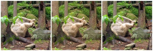Bärenkratzer