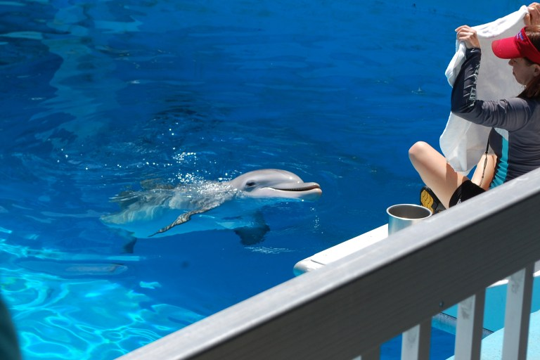 Winter the dolphin smile at CMA