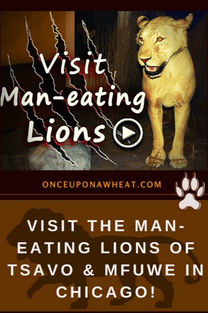 The Man-Eating Lions of Tsavo & Mfuwe!