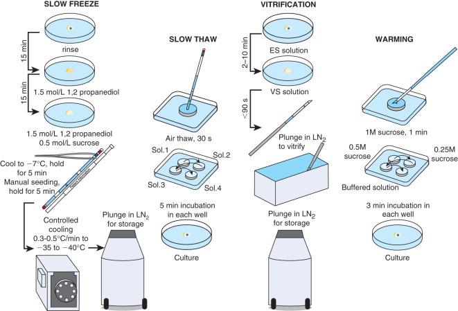 5 cell embryo no fragmentation