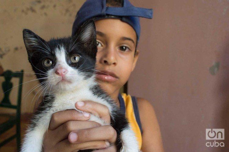 Child in Lis Núñez's cat shelter in Guanabacoa. Photo: Otmaro Rodríguez.