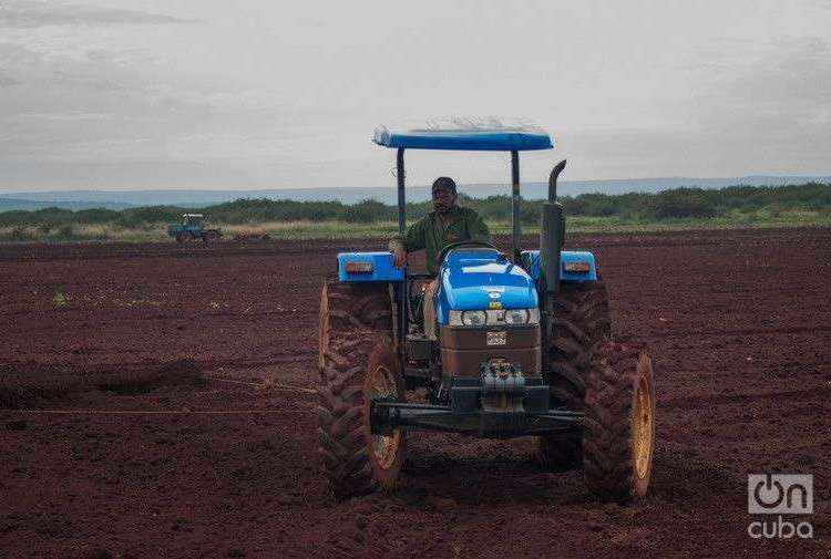 Cosecha mecanizada en Camagüey. Foto: Leandro Pérez