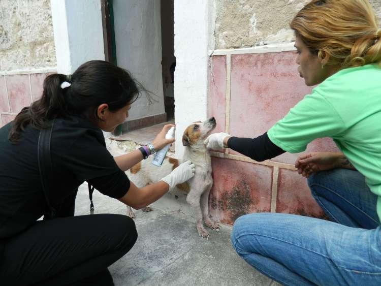 Foto: Cortesía de Protección de animales de la Ciudad