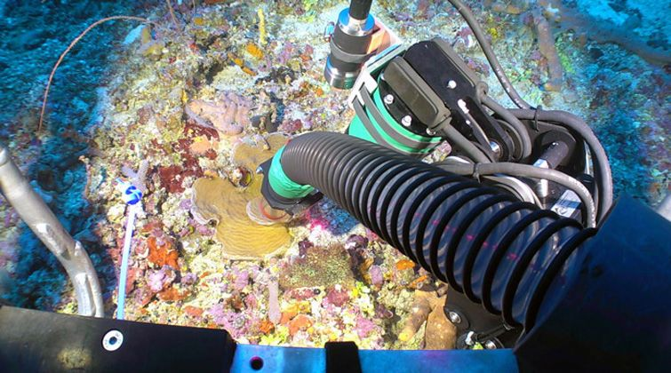The ROV was key for the collection of samples during the mission. Photo:  Cuba's Twilight Zone Reefs and Their Regional Connectivity.