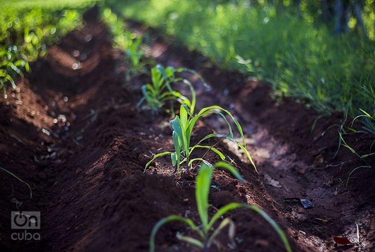 Cuba comenzará de manera gradual a cobrar impuestos en 2018 sobre la posesión y uso de las tierras agrícolas. Foto: Roby Gallego.