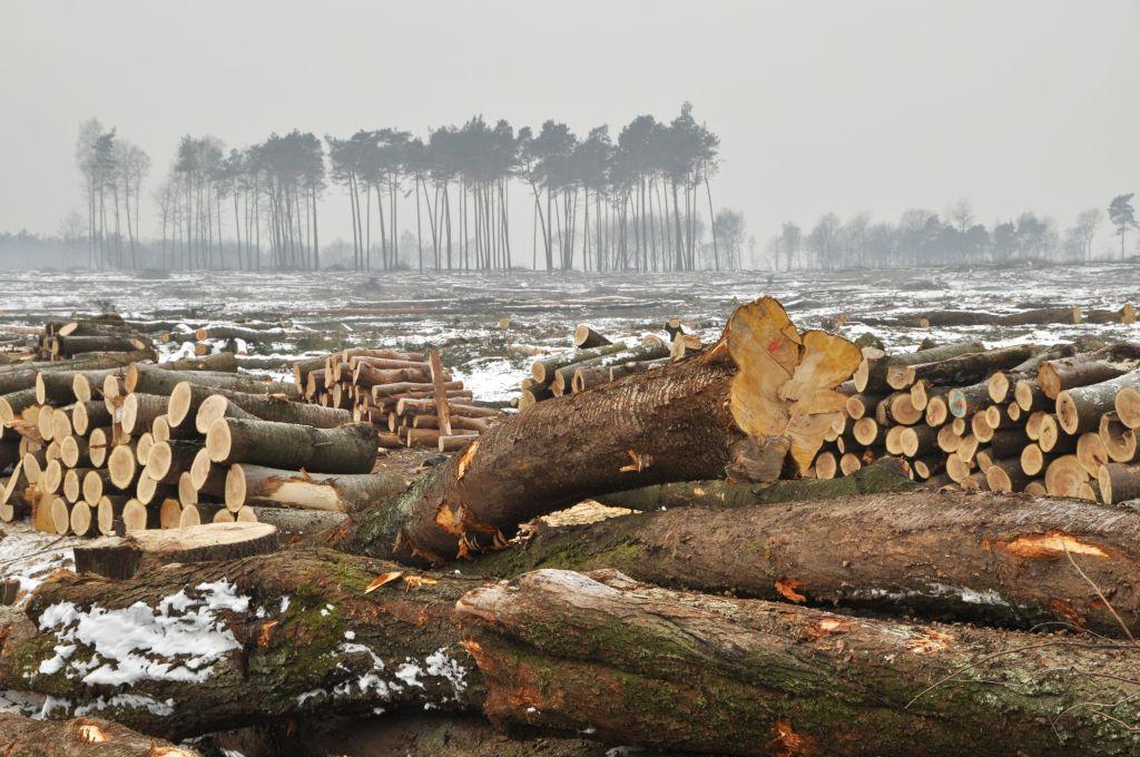 Un bosque talado durante el invierno. (Foto: WWF)