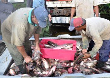 Pescadores con sus capturas en la presa Zaza, de Sancti Spíritus. Foto: Vicente Brito / Escambray.