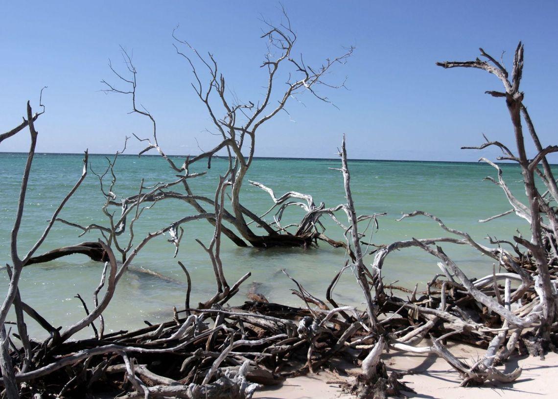 Mangalres afectados por fenómenos climatologicos en Cayo Jutía, en la provincia cubana de Pinar del Río. Foto: Jorge Luis Baños/ IPS / Archivo.