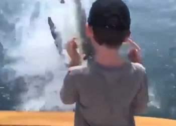 El tiburón blanco capturó al pez en el aire, a menos de dos metros del niño.