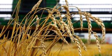 Los productores agrícolas de Míchigan ven en Cuba un mercado potencial de frijoles, manzanas, carne de cerdo y productos lácteos. Foto: AP
