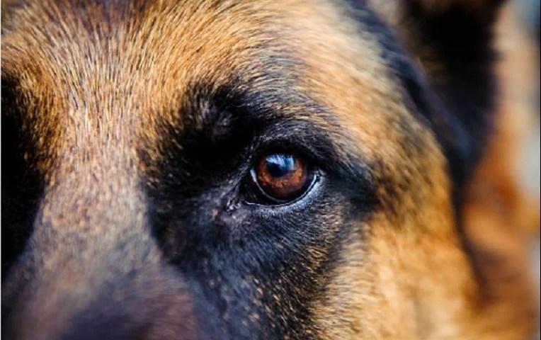 coronavirus-fallece-primer-perro