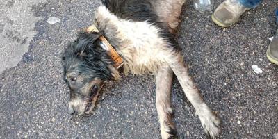 La Policía Local abre diligencias por un presunto caso de maltrato animal