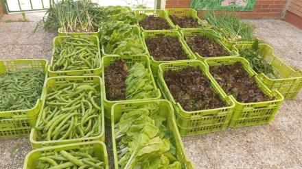 La cosecha de los huertos escolares también será entregada a familias vulnerables