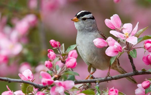 primavera-uccellino