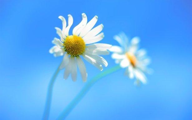 fiori-da-regalare-alla-donna-sagittario.jpg