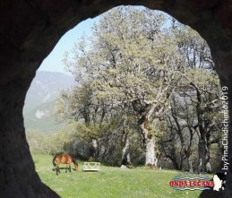 Immagine tratta da repertorio di Onda Lucana®by Pina Chidichimo 2019 Pieta' Terranova di Pollino pz 0