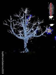 Immagine tratta da repertorio di Onda Lucana®by Miriam Salerno 2019 Potenza feste natalizie...........02