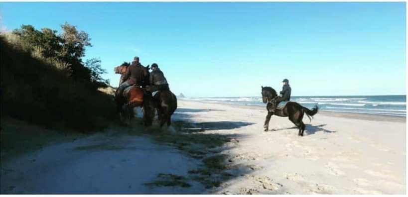 chevaux sur une plage nouvelle zelande