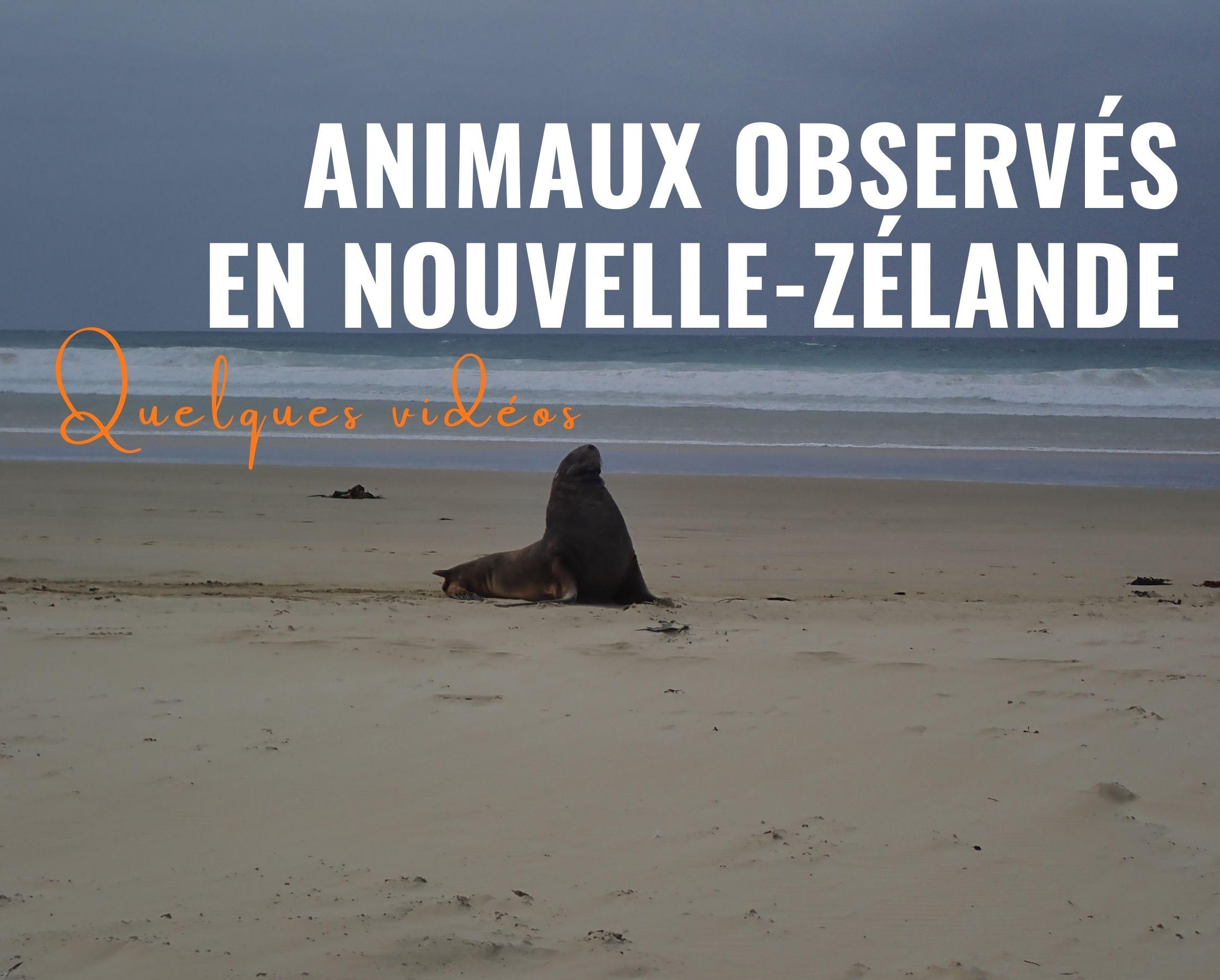 Vidéos : animaux observés en Nouvelle-Zélande