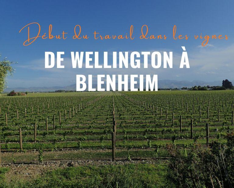 De Wellington à Blenheim et début du travail dans les vignes