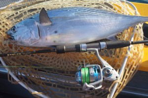 Mac Tuna Will Let You Know If You Have A Decent Spin Reel