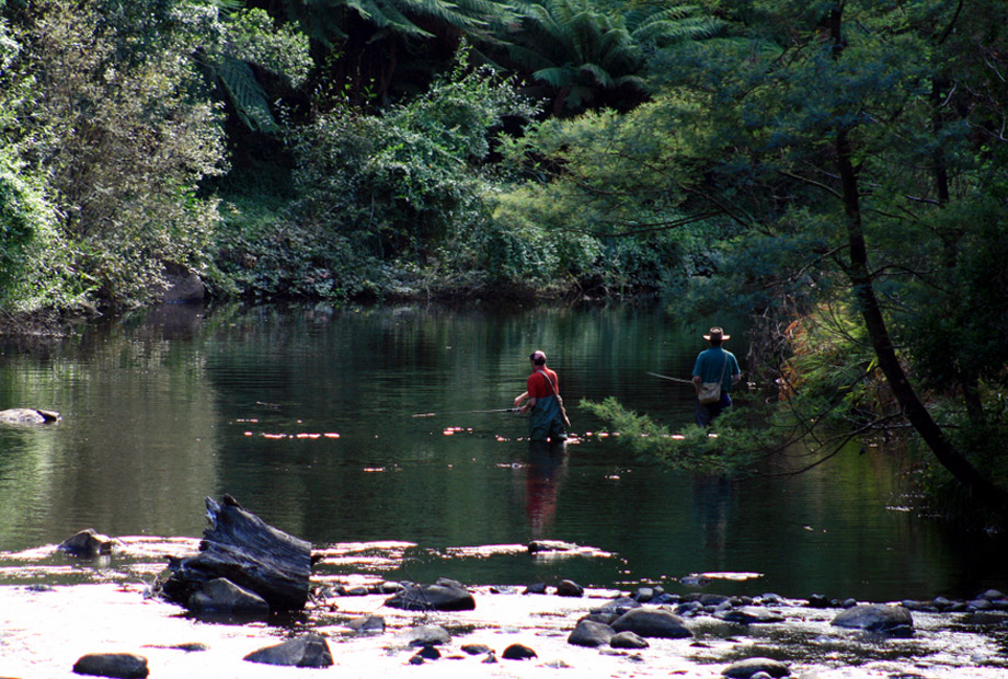 Men Trout Fishing Upper Reaches Yarra River