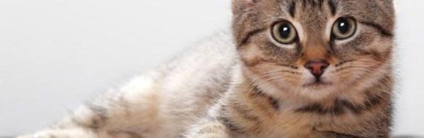 Дерматит у кошек: фото, лечение, симптомы и чем лечить