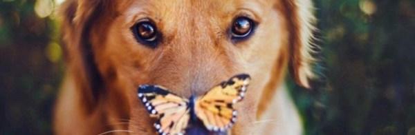 Атопический дерматит у собак: фото, лечение, симптомы и ...