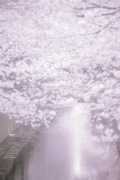 桜 中目黒
