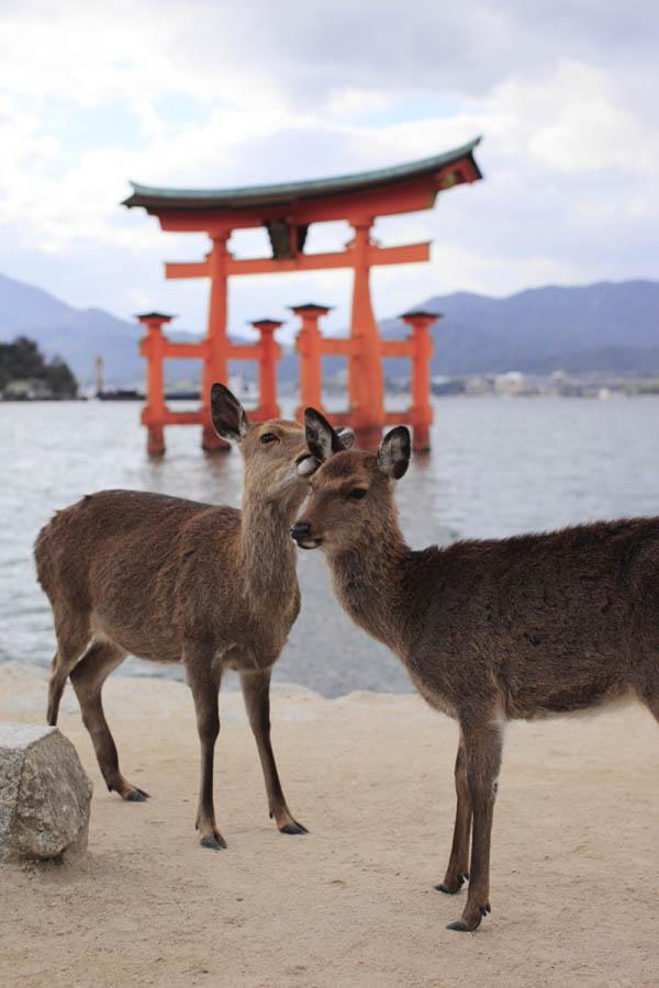 japan trip hiroshima
