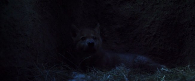 Wolf.Totem.2015.720p.BRRip.1GB.MkvCage.mkv_snapshot_00.55.34_[2016.04.05_21.32.05]
